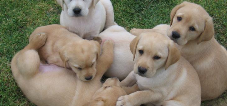 Puppy class – socializzazione